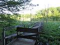 Calvert Cliffs State Park - Lusby, Maryland (14610690329).jpg