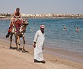 Camel on the beach 1.jpg
