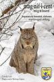 Canada lynx (8549308334).jpg