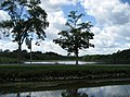 Canal d'Orléans and Étang du Gué des Cens. Vieilles-Maisons-sur-Joudry, département du Loiret, France. - panoramio.jpg