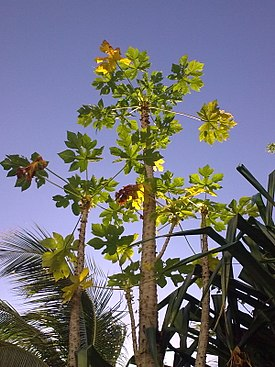 Cancun tree.jpg