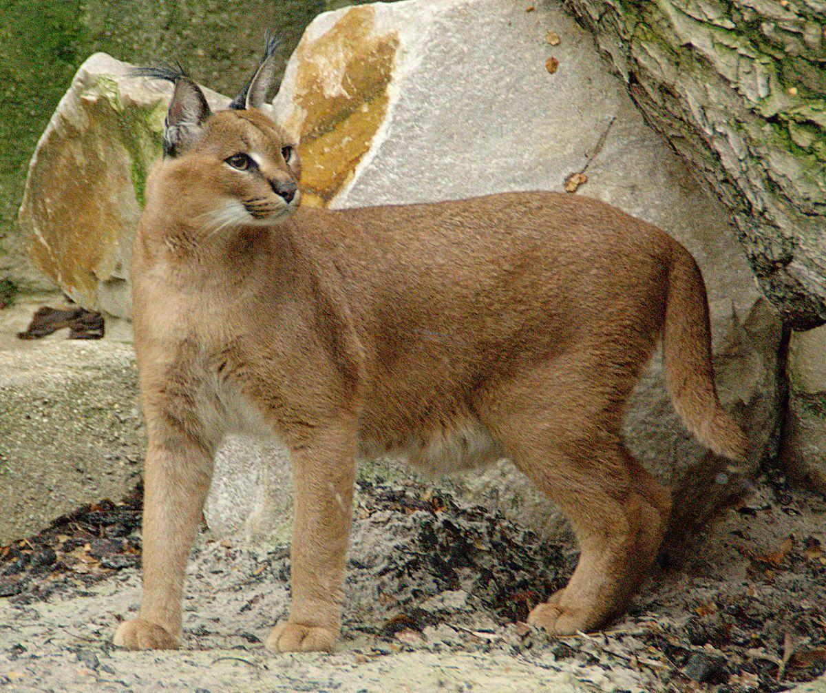 kittens for sale toledo ohio