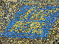 Card stunt at UCLA at Cal 10-25-08 4.JPG