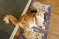 Cat213, citizen of Nottingham (34328503900).jpg