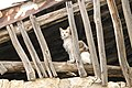 Cat Occupying Abandoned Building - Kilis - Turkey (5772025187).jpg