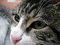 Cat face.jpg