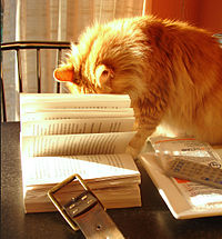 Cat with book 2320356661.jpg