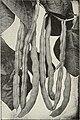 Catalog - spring 1967 (1967) (20389892859).jpg