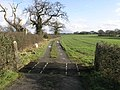 Cattle Grid and Trees - geograph.org.uk - 351761.jpg
