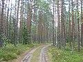 Ceļš mežā, Vecumnieku pagasts, Vecumnieku novads, Latvia - panoramio.jpg