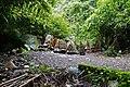 Cemetery in Trunyan, Lake Batur, Bali.jpg