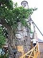 Chêne d'Allouville-Bellefosse 06.jpg