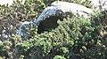 Chambered grave - geograph.org.uk - 817080.jpg