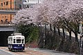 Cherry blossom trees and trams in Nagasaki city.jpg