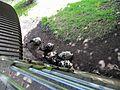 Chester, UK - panoramio - IIya Kuzhekin (12).jpg