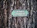 Chráněné stromořadí.jpg