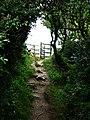 Coast path Dinas Island - geograph.org.uk - 534070.jpg
