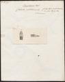 Coluber petolarius - kop - 1734-1765 - Print - Iconographia Zoologica - Special Collections University of Amsterdam - UBA01 IZ11900165.tif