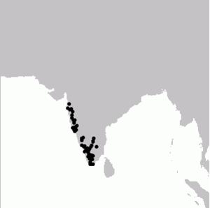 Nilgiri wood pigeon - Image: Columba elphinstonii map