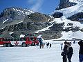 Columbia icefield visitorsA.jpg