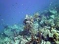 Coral Scene 10 (7342775998).jpg