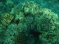 Coral reef 102.jpg