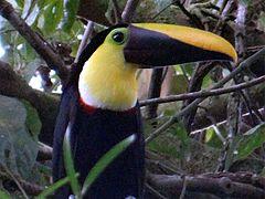 Costa Rica - Arenal 02.jpg