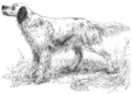 Count Howard, an English Setter, by J. M. T.png