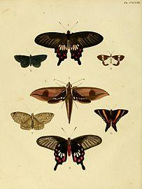Cramer&Stoll-uitlandsche kapellen vol. 2- plate 128.jpg