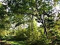 Creech Woods - geograph.org.uk - 1023855.jpg