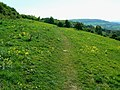 Crickley Hill Country Park (19) - geograph.org.uk - 1300343.jpg
