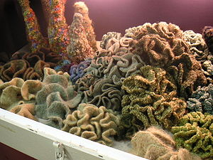 Hyperbolic crochet kelp garden by the Institut...