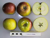 Cross section of Frankettu, National Fruit Collection (acc. 1950-163).jpg
