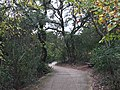 Crown Ridge Natural Area in San Antonio, TX.jpg