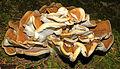 Crumbled French Toast Mushroom (7984637270).jpg