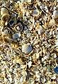 Crushedshells.jpg