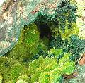 Cuprosklodowskite-Guilleminite-rad08-15c.jpg