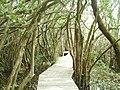 Cushamen Department, Chubut Province, Argentina - panoramio - littletroll (2).jpg