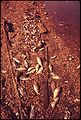DEAD FISH ON THE SHORE NEAR PORT COVINGTON - NARA - 546782.jpg