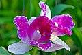 DGJ 4057 - Flower Power (3715072138).jpg