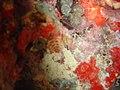 DSC00151 - recifes de coral - Naufrágio e recifes de coral no Nilo.jpg