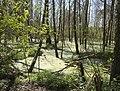 DSC0829 Міжрічинський регіональний ландшафтний парк.jpg