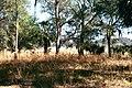 Dade battlefield pmr02.jpg