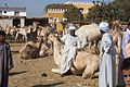 Daraw Camel Market (2).jpg