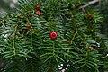 De Caesarsboom te Lo-Reninge - 368809 - onroerenderfgoed.jpg