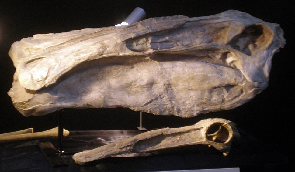 Deinocheirus Skull