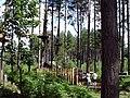"""Delamere, """"Go Ape"""" in Delamere Forest - geograph.org.uk - 207825.jpg"""