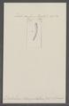 Dentalium strangulatum - - Print - Iconographia Zoologica - Special Collections University of Amsterdam - UBAINV0274 081 10 0004.tif