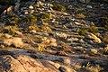 Desert sunrise III (13496554725).jpg