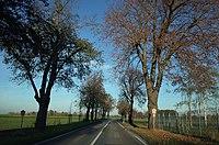 Dessau-Roßlau, Kochstedt, natural monument Lindenallee.jpg